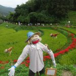 明日香村の彼岸花祭りに行っていました♪