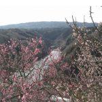 月ヶ瀬梅渓梅まつり