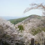吉野の桜を見てきました♪