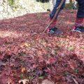 高取城跡の紅葉♪