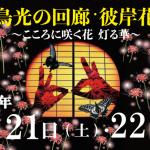 9月21日(土)・22日(日)は「飛鳥光の回廊・彼岸花祭り」
